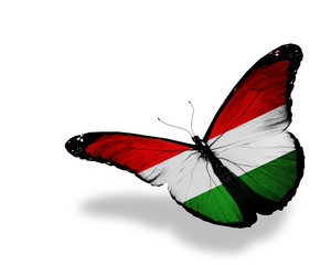 Hungarian flag butterfly flying, isolated on white background
