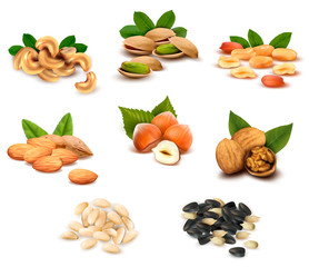 Big collection of ripe nuts and seeds. Vector.