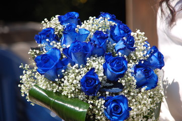 Cerca Immagini Rosa Blu