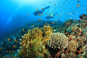 Couple of Scuba Divers swim over coral reef
