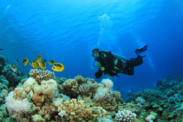 Photo sur Plexiglas Plongée Scuba Diver and Butterflyfish on coral reef