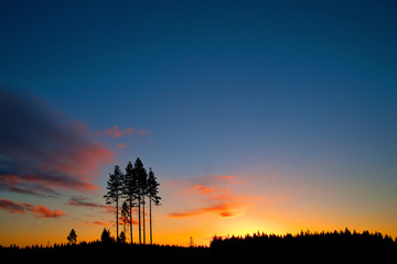 conifer trees on colorful sky at sunset