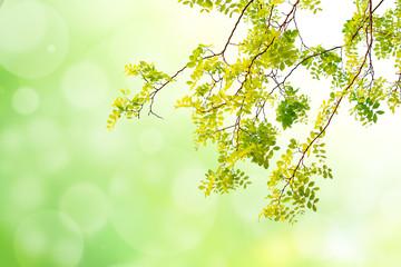 green leaf on green tone bokeh background