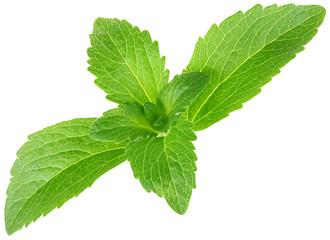 Stevia Rebaudiana, Sugar Substitute Cutout