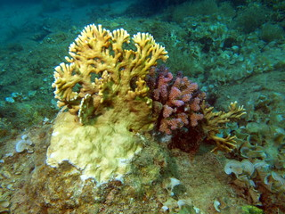 Stone coral, area of the city of Nha Trang, Vietnam