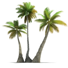 Palm tree trio rendering