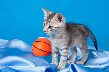 gray kitten with a ball