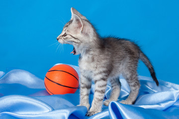 yawning kitten with a ball