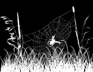 spider web in grass isolated on black