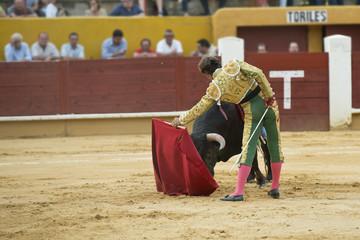 Torero toreando al toro con la muleta.