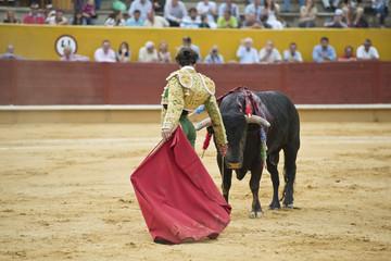 Torero preparando al toro para entrar a matar.