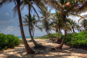 Palm Playa - Mexico