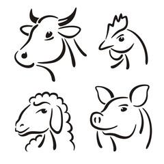 Cow Pig Sheep Chicken