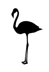 Vector, flamingo