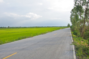Road through the field