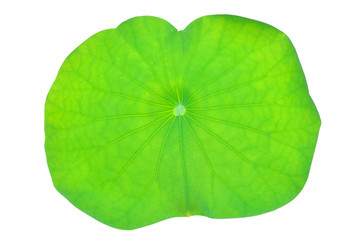 Lotus leaf isolated