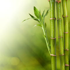 Zelfklevend Fotobehang Bamboe fresh Bamboo on Summer background
