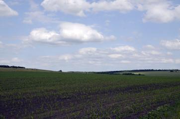 Mais field