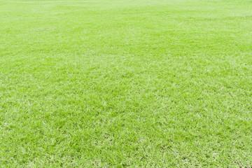 Lawn green grass texture