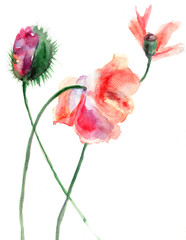 Watercolor illustration of Stylized Poppy flower