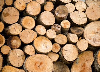 Stacked firewoods. Natural Background