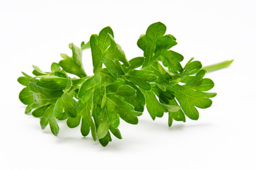 Fresh parsley isolated on a white