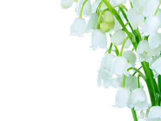 Lilies of the valley on white