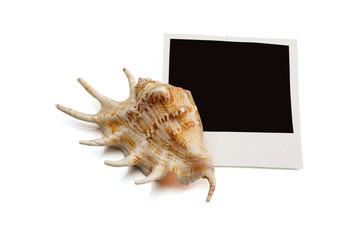 Photo frames on seashells background