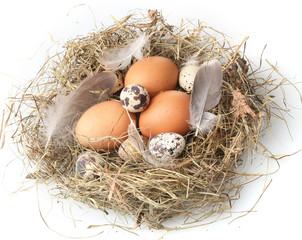 chicken and quail eggs in a nest isolated on white