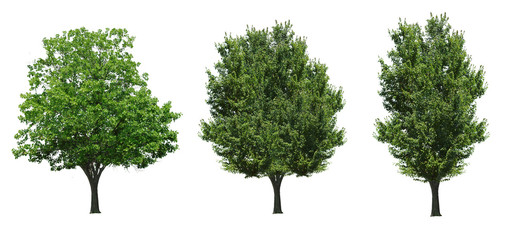 Collection tree isolated on white background