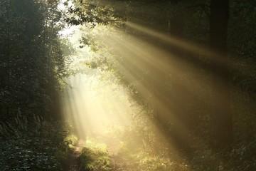 Keuken foto achterwand Bos in mist Sunlight falls on a dirt road on a foggy autumn morning