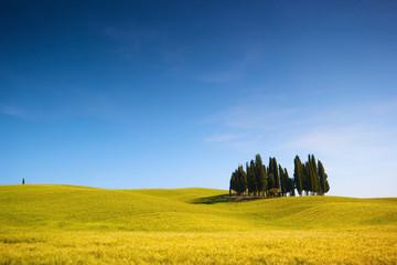 Wall Mural - Campo di grano con cipressi e cielo blu, italia