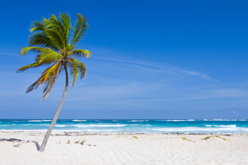 Coconut Palm Tree on the Tropical Beach, Bavaro, Punta Cana