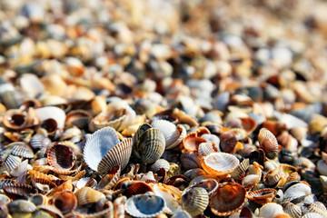 Sea shells closeup background
