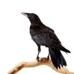 Fototapete - The bird