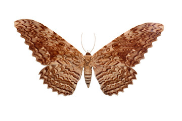 Fotoväggar - Butterfly Isolated On White