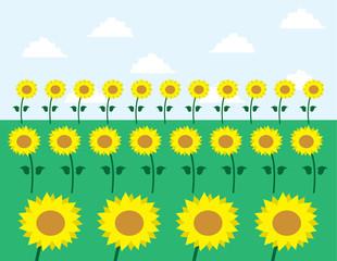 Sunflowers in grassy field