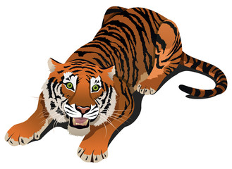 Roaring angry tiger, vector illustration