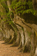 Avenue of trees at Noirlac abbey