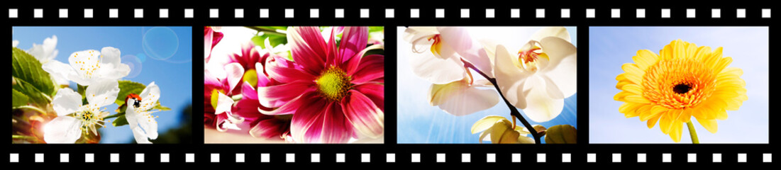 filmstrip with summer flowers pictures