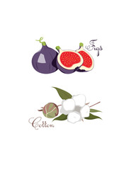 Figs & Cotton