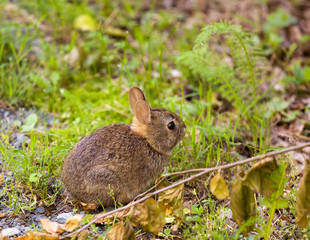 Baby rabbit in forest