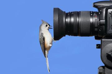 Fotoväggar - Titmouse On A Camera