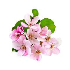 Apple blossom pink