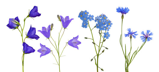 blue flowers collection isolated on white