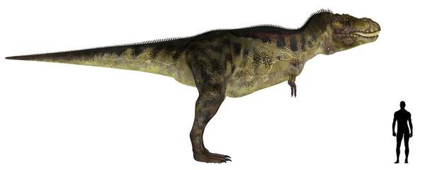 Tyrannosaurus Size Comparison