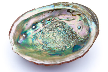 abalone shell inside with clipping path