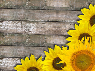 sunflower corner on old dry wood