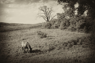 vintage photo of a landscape with horse at summer