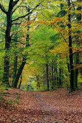 Autumn fall forest scene with vibrant colors